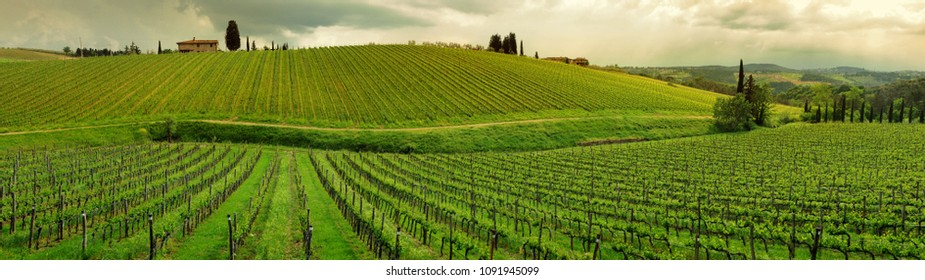 Beautiful vineyards at sunset during springtime in Chianti region. Tuscany, Italy.