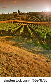 Beautiful vineyards at sunset in Tuscany, (Chianti region) Italy.