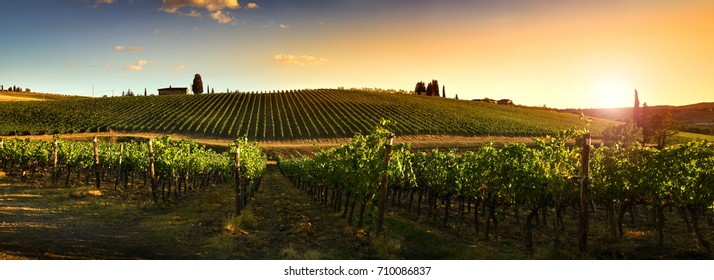 Beautiful vineyards at sunset in Tuscany, Italy.