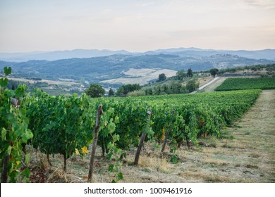 beautiful vineyards in Tuscany Italy