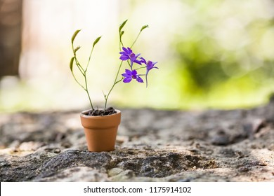Beautiful violet Consolida flowers in brown flowerpot on stone background. Spring time floristry still life photo. Shallow depth of field, copy space.