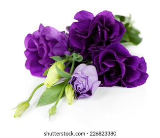 Beautiful violet eustoma isolated on white