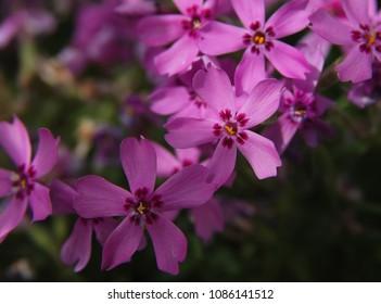 Beautiful violet flowers blackground