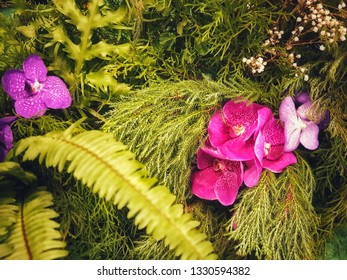 Beautiful violet orchid flowers blooming isolated on green fern background .floral wallpaper