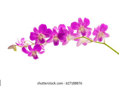 Beautiful violet orchid isolated on white background with clipping path