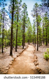 beautiful walking footpath in the mountain forest near Vilaflor village, Tenerife, Spain