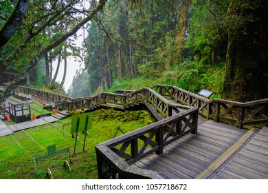 A Beautiful Walking trail along with Pine trees forest at Alishan National Park, Chiayi, Taiwan