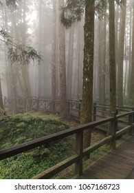 A Beautiful Walking trail along with Pine trees forest on a foggy day at Alishan National Forest Recreation Area ,Alishan, Taiwan
