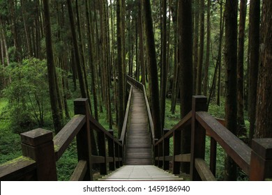 Beautiful Walking trail along with Pine trees forest.Alishan National Forest Recreation Area in Chiayi County, Alishan Township, Taiwan