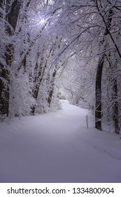 Beautiful walking trail through a snowy forest
