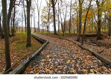 Beautiful walkway in with fall colors in Michigan, USA during Autumn season.