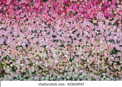 Beautiful wall made of red white yellow flowers, roses,  press-wall, background, valentines day background