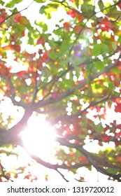 beautiful warm light of sun in autumn morning day, abstract blur bokeh in nature