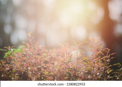 Beautiful warm light from the sun in winter. the image focus and blur some area.