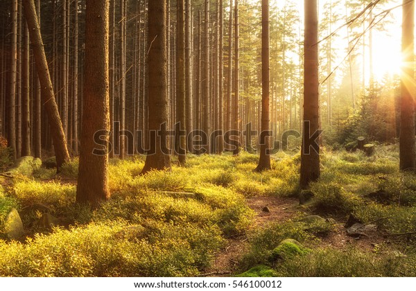 Beautiful warm sun in the Harz forest