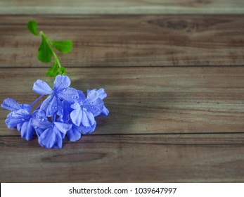 Beautiful water drop on blue petals on wooden table.