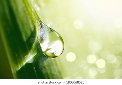 Beautiful water drop sparkle in sun on grass in sunlight, close-up macro. Big droplet of morning dew outdoor, beautiful round bokeh. Amazing artistic image of purity of nature. - Shutterstock ID 1808068525