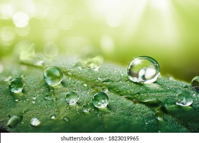 Beautiful water drops after rain on green leaf in sunlight, macro. Many droplets of morning dew outdoor, beautiful round bokeh, selective focus. Amazing artistic image of purity and fresh of nature.