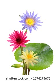 beautiful Water lily flower bouquet isolated on white background