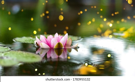 Beautiful water lily flower in the garden pond. Water drops on the big green leaf and water lily reflection on the water. Light and Shadows.