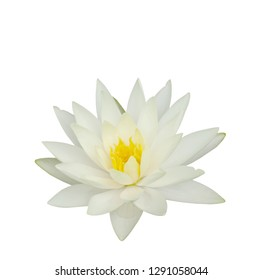 Beautiful water lily flower in the lake .Nymphaeas reflection in the pond