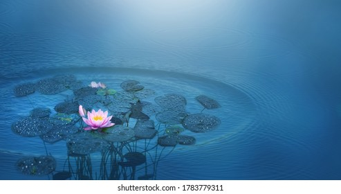 beautiful water lily flower in a pond in sunshine, rain drops on leaf, decorative blue water background with rain drop circles for an idyllic wellness concept