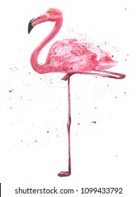 Beautiful watercolor illustration of Pink Caribbean or American flamingo exotic bird painted illustration