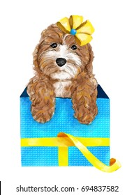 Beautiful watercolor illustration of poodle in the gift box with bow  isolated on white background. Could be used for postcards/ prints / t-shirts etc