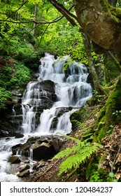 beautiful waterfall in the forest with ferns