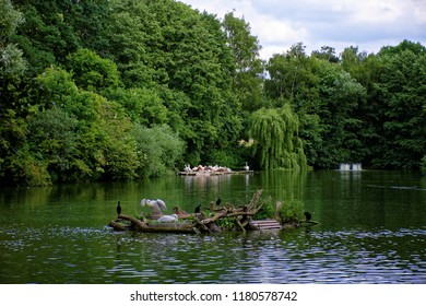 beautiful waterfowl resting on the pond