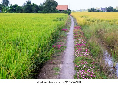 Beautiful way with colorful flowers in the country