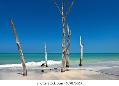 beautiful-weathered-dead-trees-on-260nw-