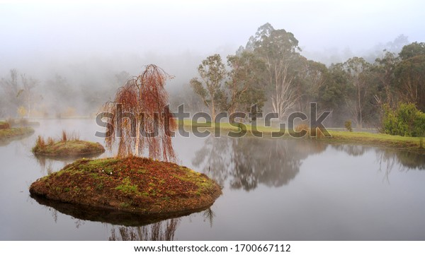 beautiful-weeping-red-tree-on-600w-17006