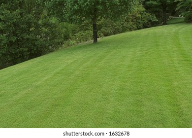 beautiful well-cared for lawn