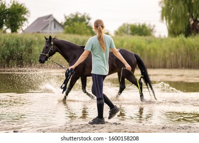 Beautiful well-groomed dark horse for a walk by the lake. A horse runs on water. Strength and Beauty.