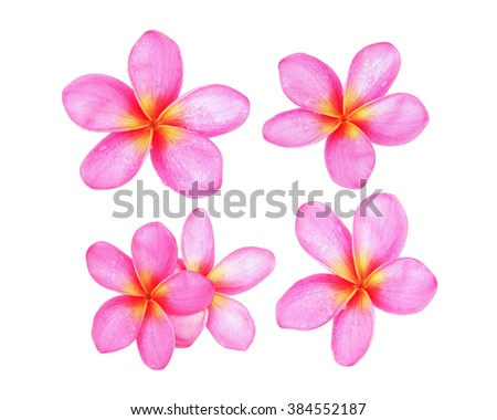 Pink Beautiful Flower White Tropical Pictures Picturesboss