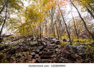 Beautiful Wet Stone Staircase Path Leading Through Dense Forest in Fall on Mountain with Rocks on a Foggy Autumn Day. Devils Lake Wisconsin