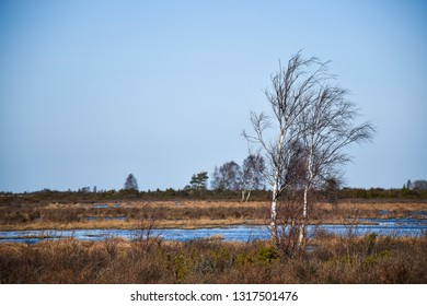 Beautiful wetland landscape by early spring season at the swedish island Oland