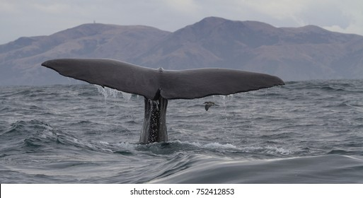 Beautiful whale in kaikoura
