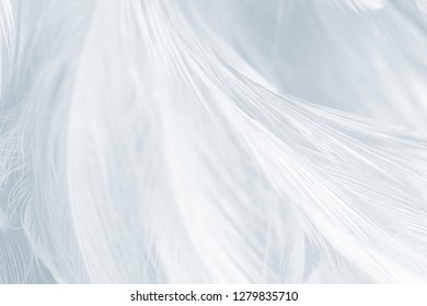 Beautiful white baby blue colors tone feather pattern texture background for Decorative design wallpaper and other