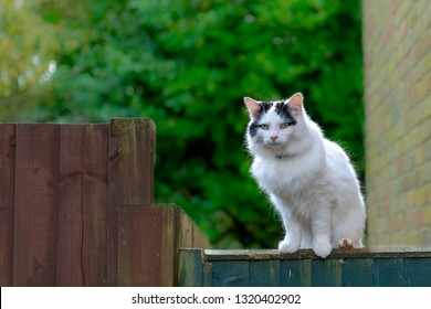 Beautiful white bigcat sitting on the fence