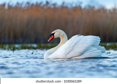 beautiful white bird on spring lake , spring, new life and restoration of nature