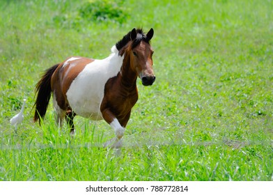A beautiful white brown horse running in a forest