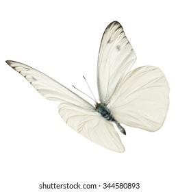 Beautiful white butterfly flying isolated on white background