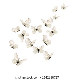 Beautiful white butterfly isolated on white background.
