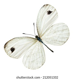 Beautiful white Butterfly isolated on white background