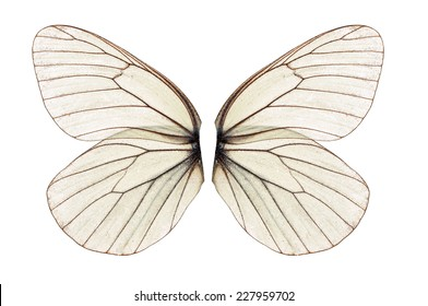Beautiful white butterfly wing isolated on white background