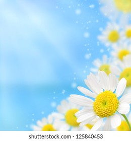 beautiful white camomile floral frame on a blue background