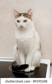 Beautiful white cat sitting on the cooker