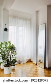 a beautiful white colour modern house wall with green trees plant on white pot on brownish surface